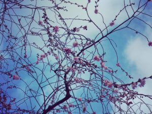 Dein Leben leben – alte Muster loslassen und neu wählen